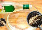 Миниатюра к статье Уксус от вшей и гнид: рецепт